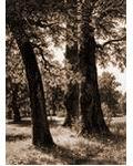 木棉樹的某年(起點)